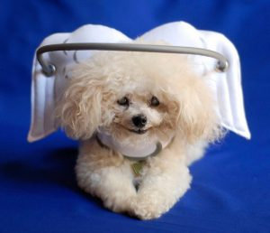 """My invention Muffin's Halo featured on MSN as """"Eye-Catching"""" halo!"""