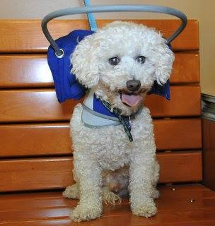 Blind dog harness