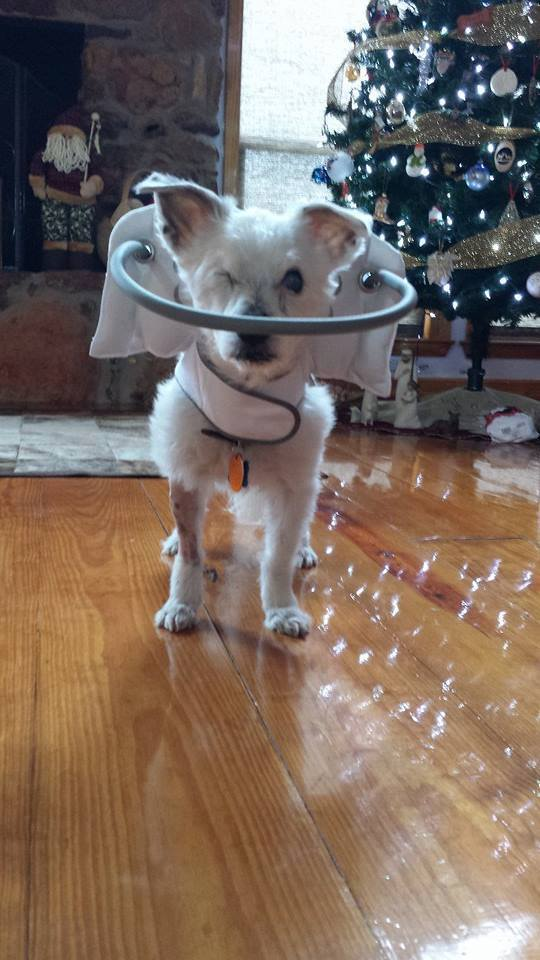Muffin's Halo Photos | Blind Dog Frosty