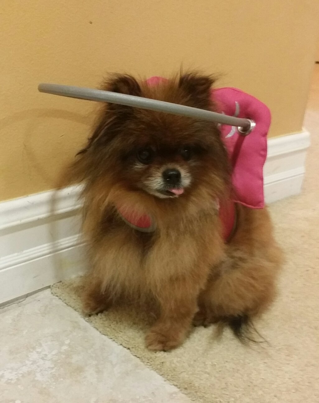 Muffin S Halo Pink Angel Wings Blind Dog Shield Muffin