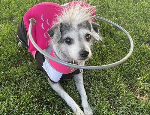Muffin's Halo In The News
