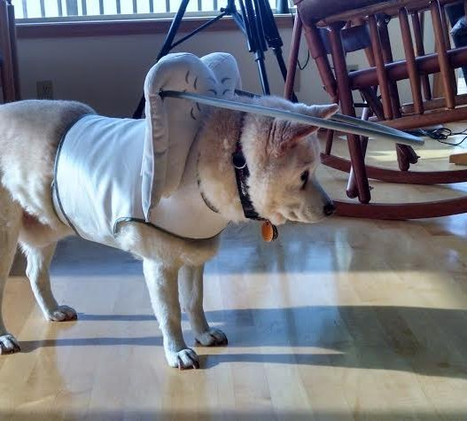 Harness For Blind Dogs White
