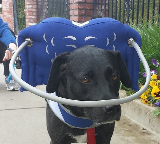Blind dog harness for big dogs