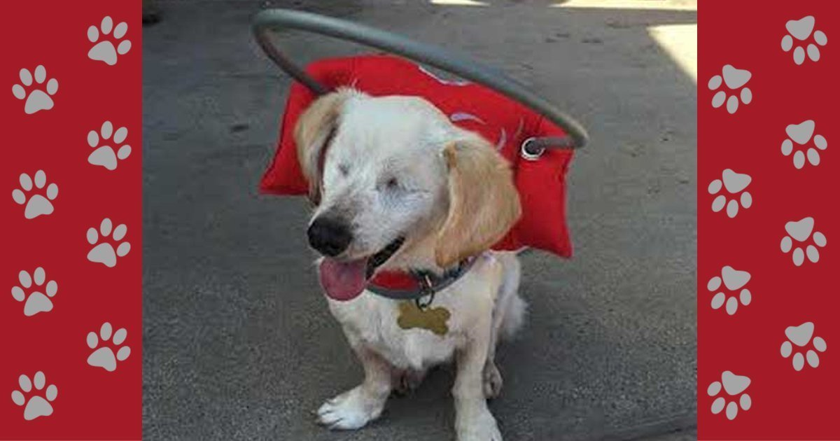 Red Angel Wings Shop For Our Harness For Blind Dogs