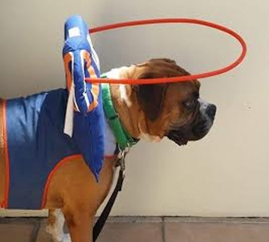 Large quarterback harness for blind dogs
