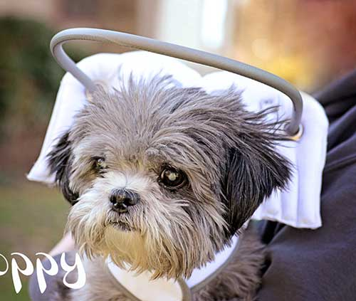 Muffin S Halo Blind Dog Halo Blind Dog Harness