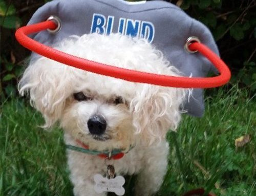 Living and Caring for a Blind Dog