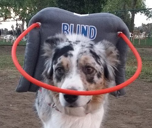 My-Blind-Dog-Halo