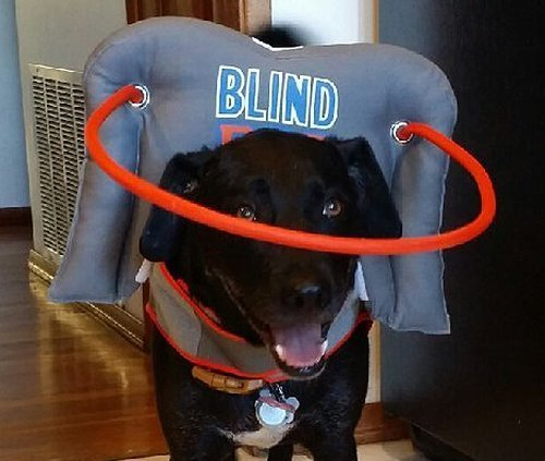 My-Blind-dogs-halo-6