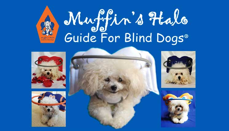 muffins-halo-blind-dog-postcard