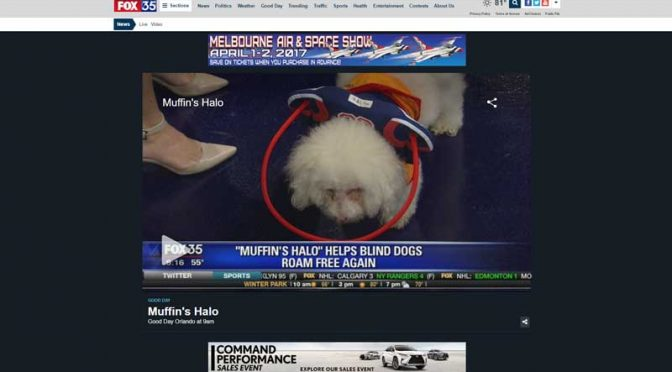 Pup on the news wearing a sports themed blind dog bumper collar