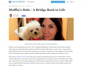 Help your dog with a harness for blind dogs