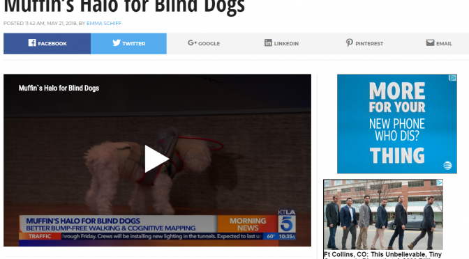 See what everyone is saying about our blind dog bumper
