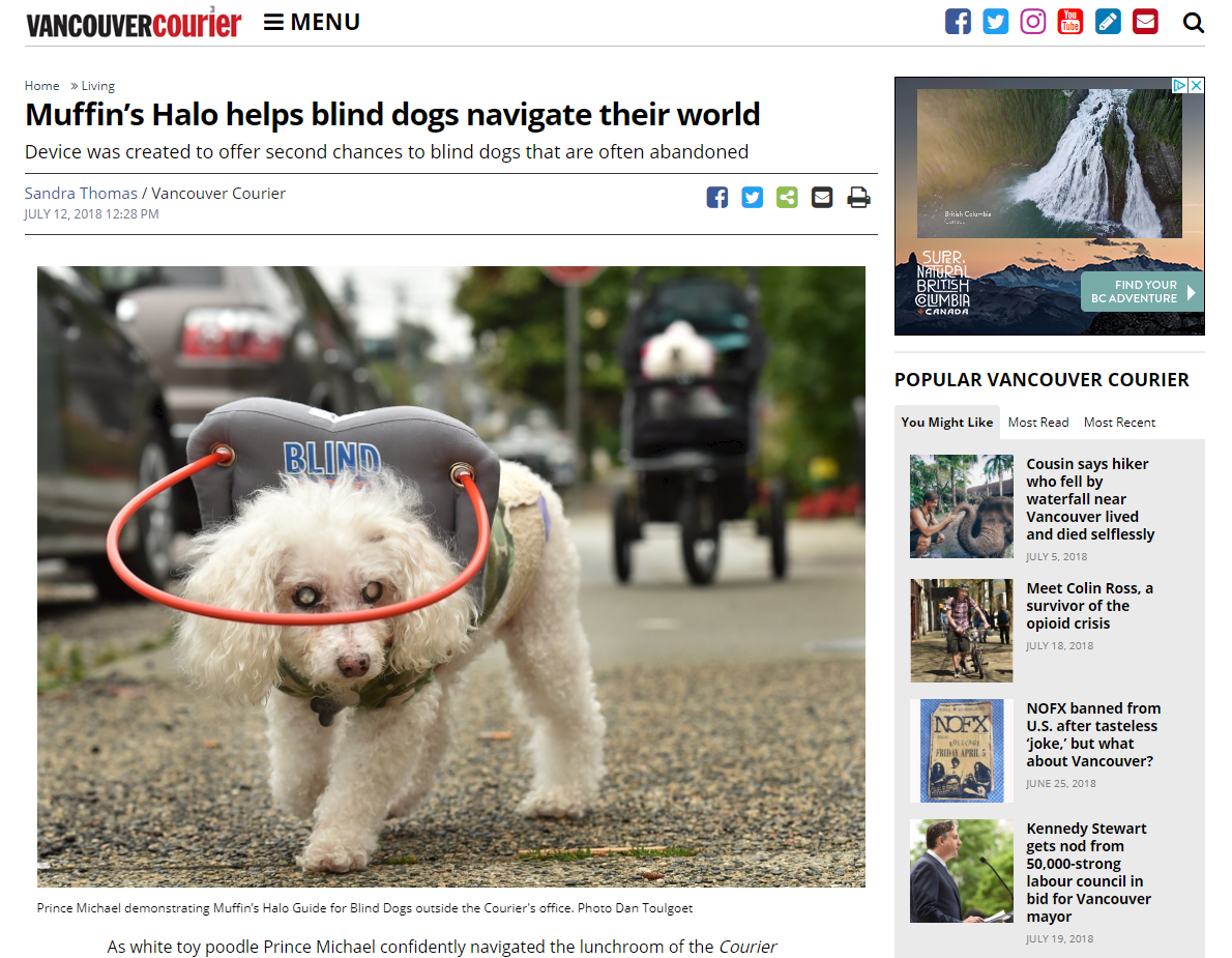 Get help for blind dogs with the Muffin's Halo