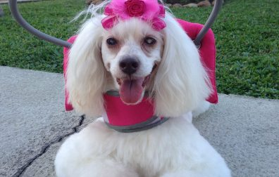Can a Blind and Deaf Dog Be Happy?