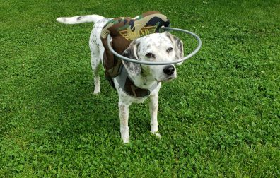 Helping Your Dog Adapt To Blindness