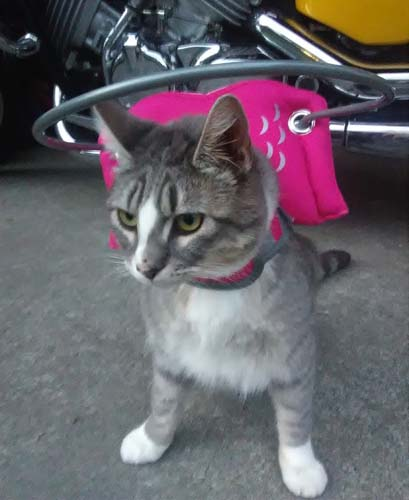 Halo harness for blind cats
