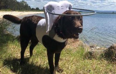 How to Keep a Blind Dog Active