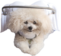 Muffin's Halo Guide For Blind Dogs